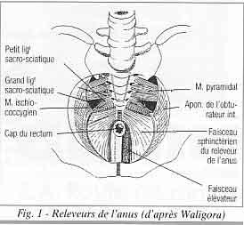 La faiblesse dans les muscles des mains à cervical osteokhondroze